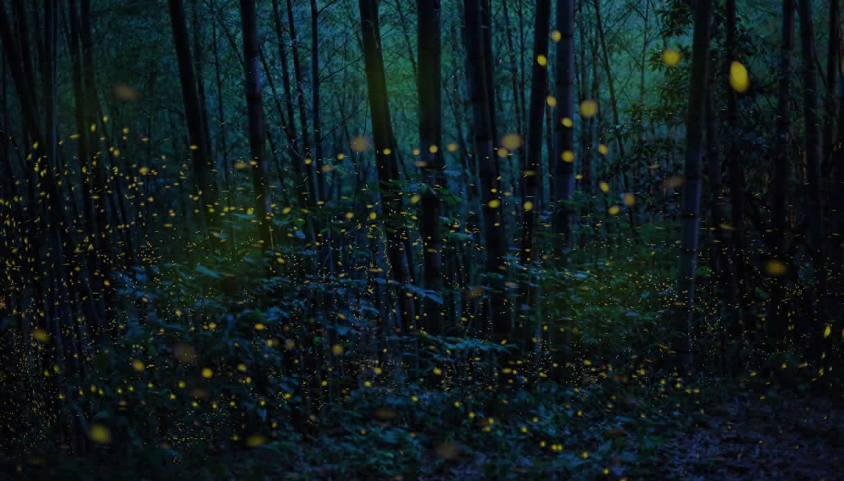 A forest full of fireflies even brighter